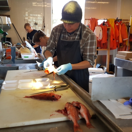 Dave dissects the gonads, liver, muscle and otoliths from a Chilipepper rockfish.